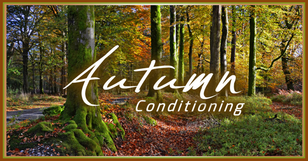 fb-image-autumn